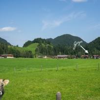 Kuh vor Tiefenbach